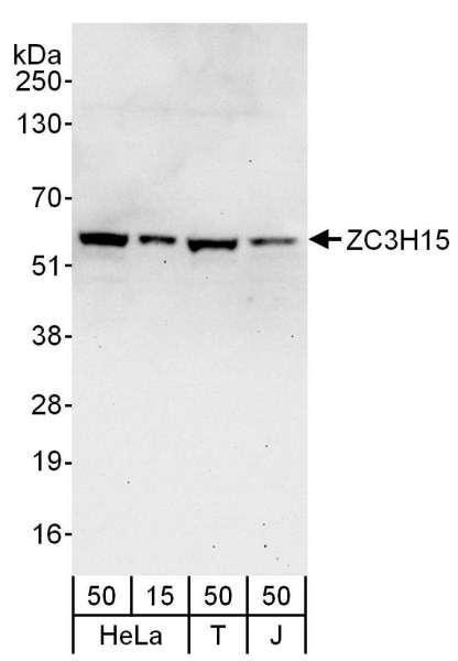 Anti-ZC3H15
