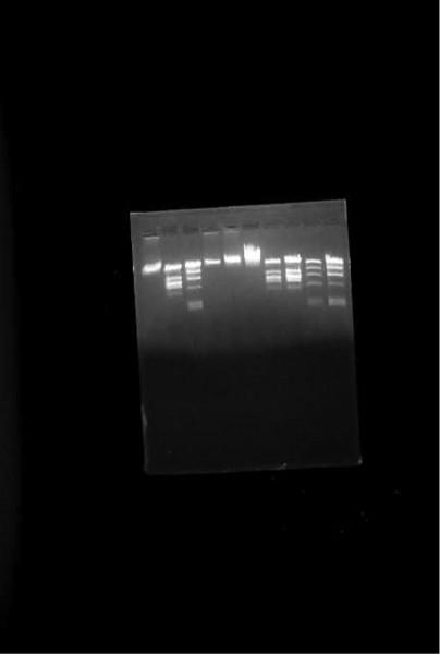 DNA Lambda C1857 S7, BioAssay
