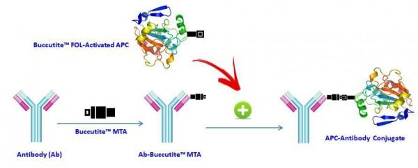 Buccutite(TM) Rapid APC-Cy5.5 Tandem Antibody Labeling Kit *Microscale Optimized for Labeling 100 ug
