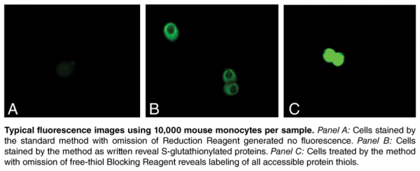 S-Glutathionylated Protein Detection Kit