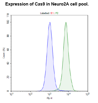Cas9-Expressing Neuro2A Cell Pool