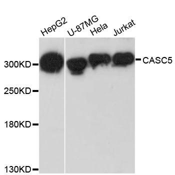 Anti-CASC5