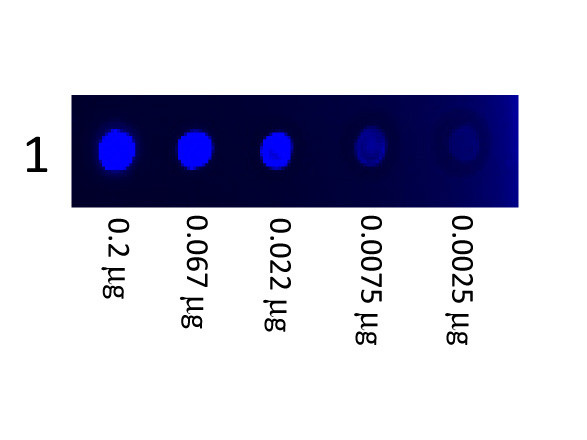 Mouse IgG3 Subclass Fluorescein Conjugated