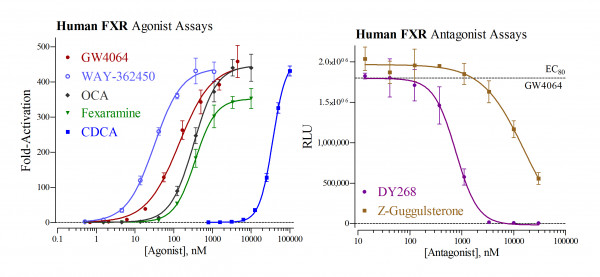 FXR (human) Reporter Assay Kit