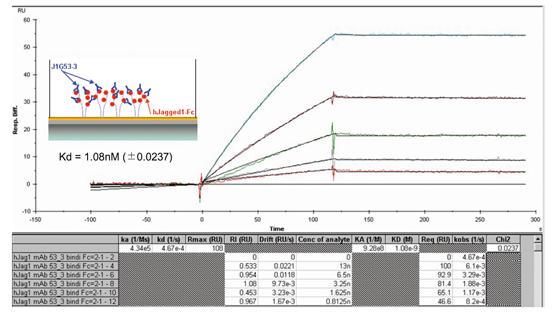 Anti-Jagged-1 (human), clone J1G53-3, FITC conjugated