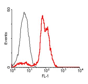 Anti-ACE2 (human), clone AC18F, Biotin conjugated