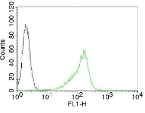Anti-Nucleoli Marker, clone NM95