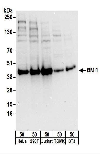Anti-BMI1