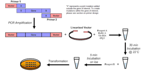 Fast and Efficient Mutagenesis Kit without Competent Cells