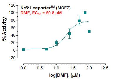 Nrf2 Leeporter(TM) MCF7 Cell Line