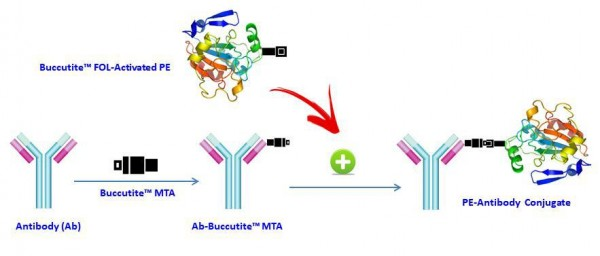 Buccutite(TM) Rapid PE-Cy5.5 Tandem Antibody Labeling Kit *Microscale Optimized for Labeling 100 ug