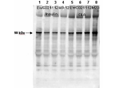 Rat Plasma (Non-Sterile) in Sodium Heparin