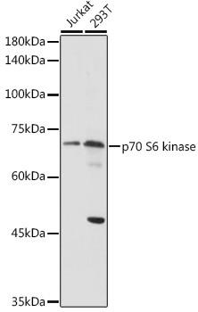 Anti-RPS6KB1