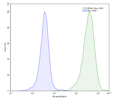 BCMA / GLuc - CHO Recombinant Cell Line