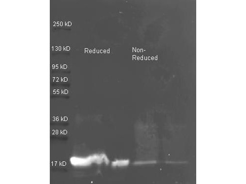 Anti-Trypsin Inhibitor