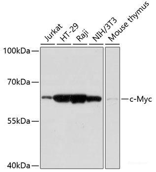 Anti-c-Myc