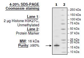 Histone H3 K27C, Full Length
