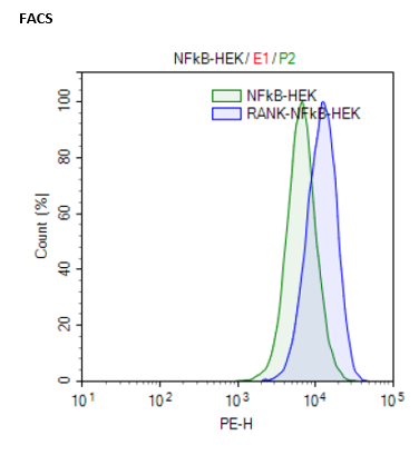 RANK / NF-kappaB Reporter - HEK293 Recombinant Cell Line