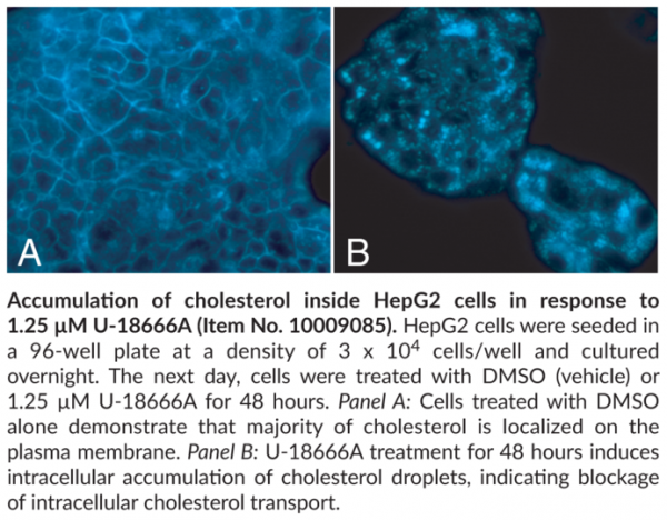Cholesterol Cell-Based Detection Assay Kit