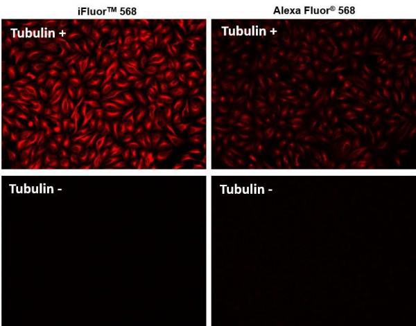 iFluor(TM) 568 goat anti-mouse IgG (H+L)