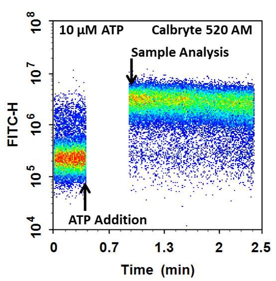 Cell Meter(TM) Flow Cytometric Calcium Assay Kit