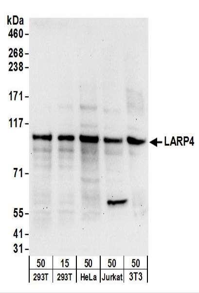 Anti-LARP4