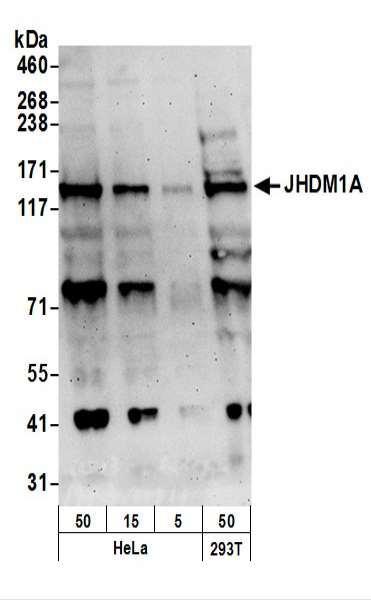 Anti-JHDM1A