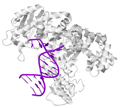 DNA-Polymerase-I