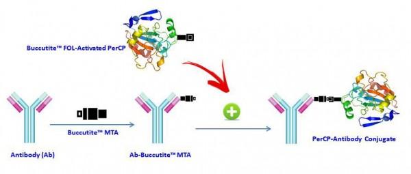 Buccutite(TM) Rapid PerCP Antibody Labeling Kit *Microscale Optimized for Labeling 25 ug Antibody Pe