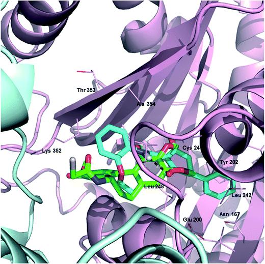 Lyophilized Tubulin