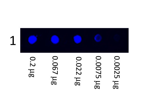 Anti-Human IgG (H&L), Fluorescein conjugated