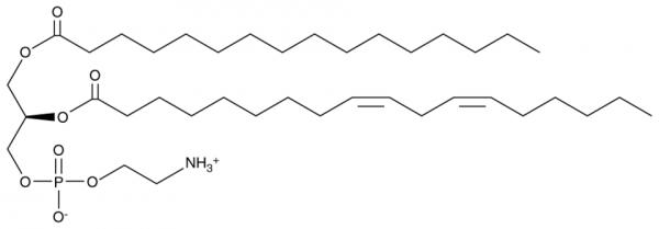 1-Palmitoyl-2-linoleoyl PE