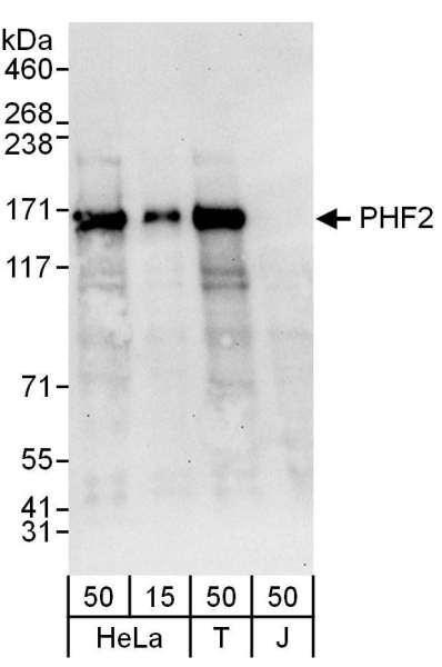 Anti-PHF2