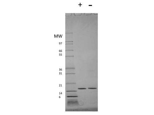 Interferon-alpha 2a