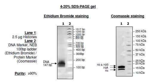 Recombinant Nucleosomes (E. coli)