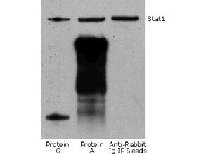 Anti-Rabbit IgG HRP conjugated (Rabbit TrueBlot®), clone eB182