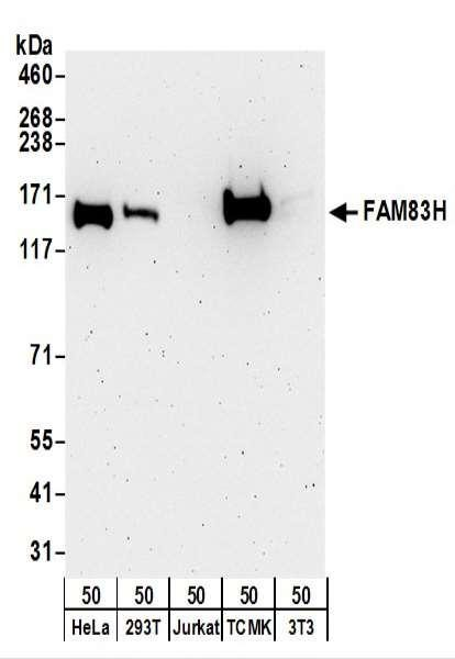 Anti-FAM83H