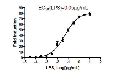 NF-kappaB Luciferase Reporter Lentivirus