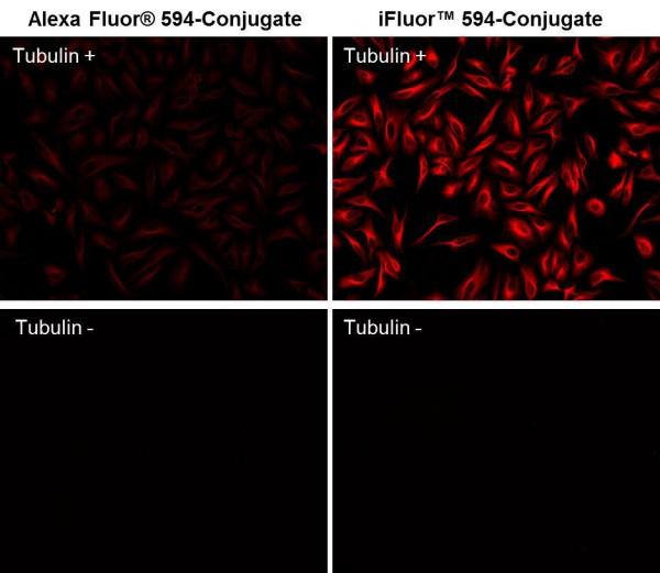 iFluor(TM) 594 maleimide