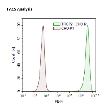 TROP2 - CHO-K1 Recombinant Cell Line