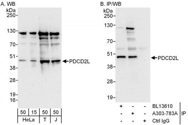 Anti-PDCD2L