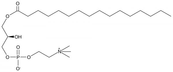 1-Palmitoyl-2-hydroxy-sn-glycero-3-PC