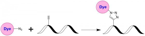 iFluor(TM) 488 azide