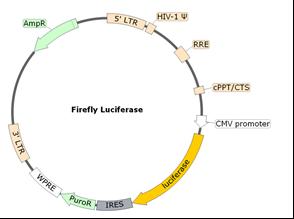 Spike (B.1.617.2 Delta Variant) Pseudotyped Lentivirus (Luc Reporter)
