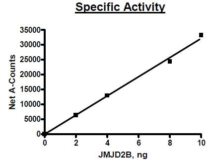 JMJD2b, GST tag, active human recombinant protein