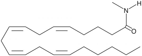 Arachidonoyl-N-methyl amide