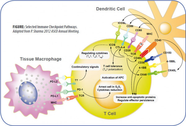 Immune-Checkpoint-Pathways