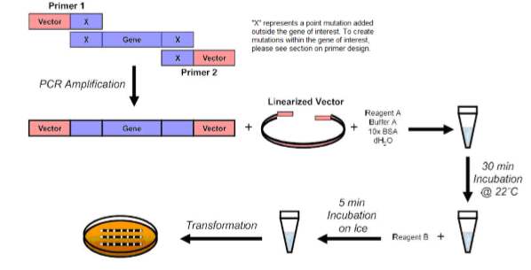 Fast and Efficient Mutagenesis Kit with Competent Cells