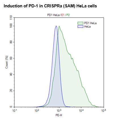 CRISPRa (SAM) HeLa Cell Line