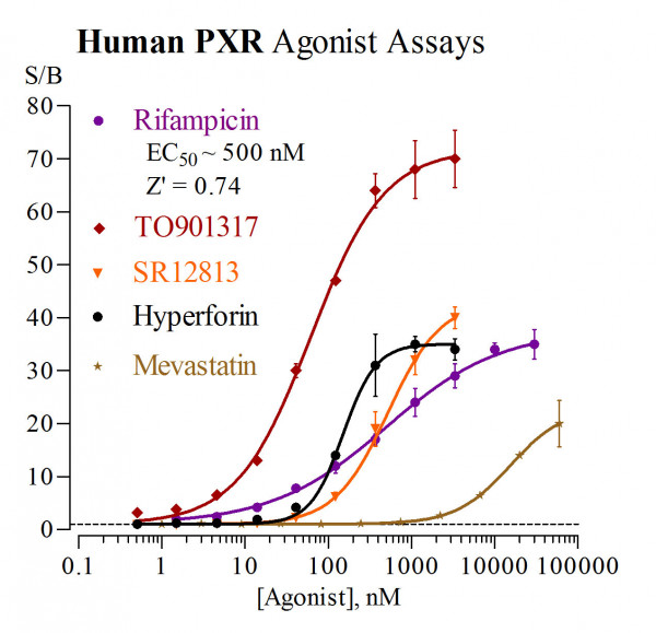 PXR (human) Reporter Assay Kit